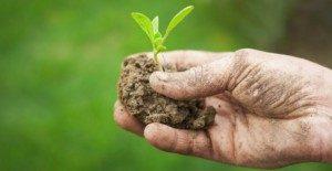 agricoltura-biologica-300x155
